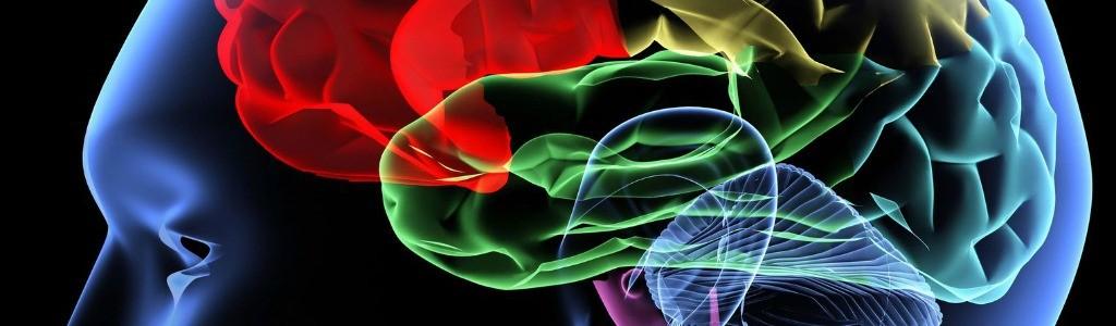 cerveau-1024