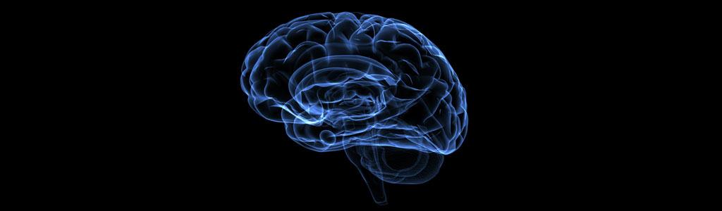«Le cerveau se répare de lui-même dans une certaine mesure»
