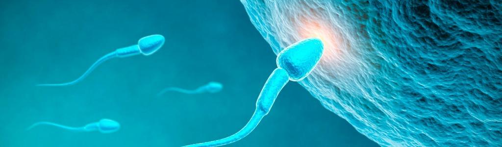 Les produits chimiques menacent la fertilité