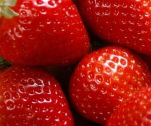 Cultiver des fraises qui ont du goût dans des containers