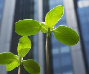 Préserver les écosystèmes augmente la rentabilité des entreprises
