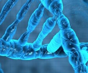 Guêpe parasite Venturia : le complice viral démasqué