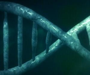 Notre intelligence est-elle déterminée par nos gènes ?