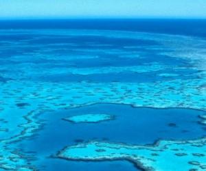 Diminution des récifs coralliens : quelles causes ?