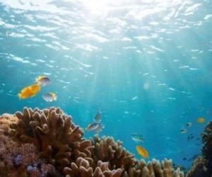 Diminution des récifs coralliens : quelles conséquences ?