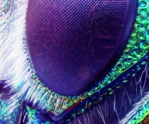 Entrer dans la tête d'une mouche pour décoder son comportement