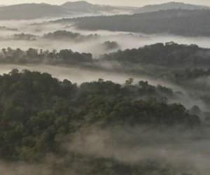 La biomasse aérienne de la végétation de la zone tropicale n'a plus d'impact positif sur le stockage du carbone