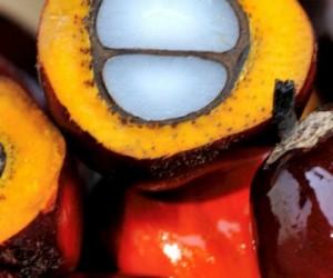 L'huile de palme durable l'est-elle vraiment ?