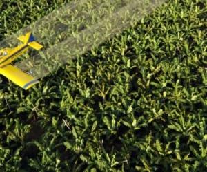 Pesticides : une avancée majeure dans l'évaluation des risques cumulés