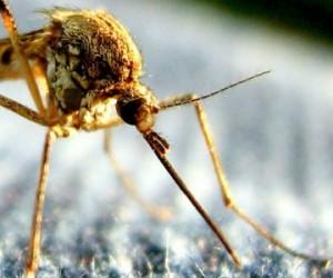 Zika : l'épidémie se mondialise, les mesures s'organisent