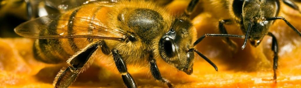abeilles1024