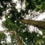 Les forêts tropicales perdent de plus en plus leur carbone