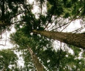Plus il fait chaud, plus le pouvoir isolant des forêts augmente