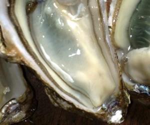 Les huîtres menacées par les micro-plastiques dans les océans