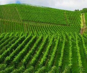 Épandage des pesticides: l'Anses défend son évaluation des risques