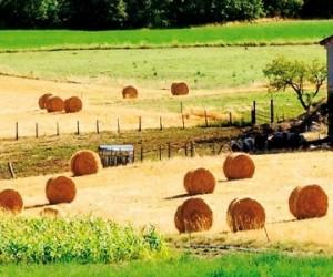 Des riverains agricoles exposés aux pesticides
