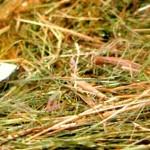 HOP défend ses propositions pour des produits réparables en Europe