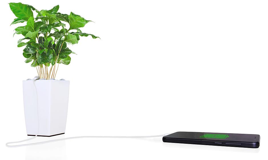 Bioo : la start-up qui produit de l'électricité avec des plantes