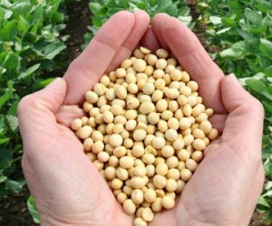 Le glyphosate, un herbicide controversé de San Francisco au Vietnam