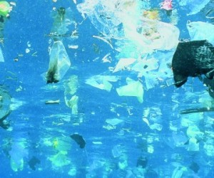 Plastic garbage is swimming on rhe water surface --- Image by © Gary Bell/Corbis