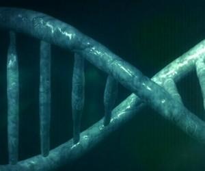 Les clés d'un processus majeur de réparation de l'ADN
