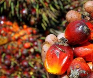 Rejet de l'amendement sur l'huile de palme : les écolos se réjouissent, Total grimace