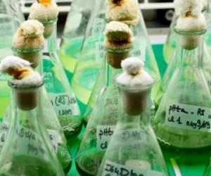 Micro-algues : toujours dans la course aux biocarburants ?