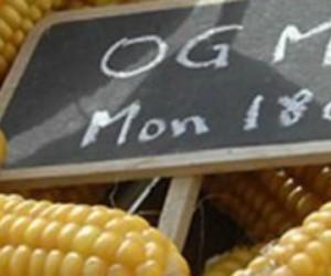 110 prix Nobel défendent les OGM