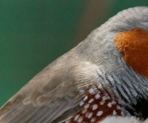 Recherche : les oiseaux intensifient leurs soins lorsque leurs poussins sont stressés