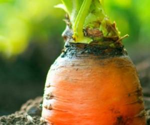Croissance record pour l'agriculture biologique !
