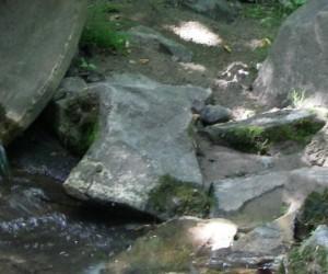 Pollution : les rivières dans un sale état !