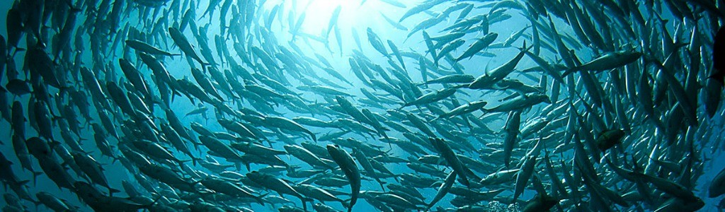 banc-poissons