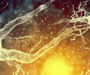 Des scientifiques dessinent une nouvelle carte du cerveau