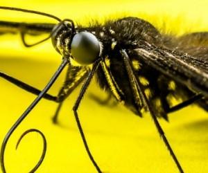Invasion des insectes : l'économie mondiale affectée