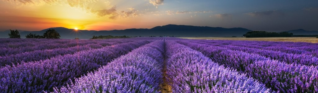 Provence1024