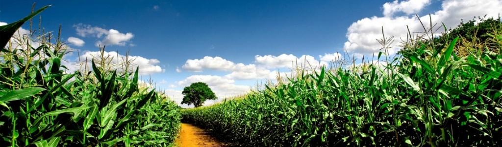 agriculture-numerique1140