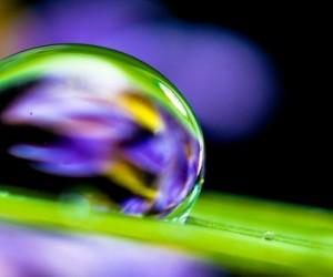 Recréer des surfaces superhydrophobes et antibuée en s'inspirant de la nature
