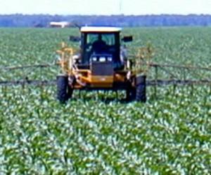 Monsanto connait la toxicité du glyphosate depuis 1999