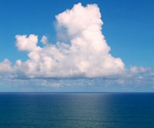 La biodiversité se déplace plus vite en mer que sur terre