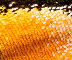 57971298 - extreme magnification - butterfly wing on microscope