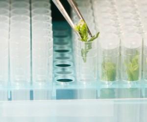 La chimie du végétal s'implante dans tous les secteurs