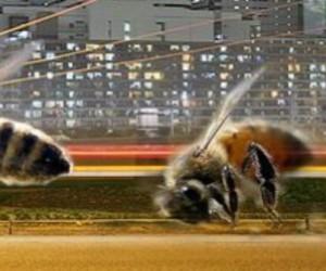 Menace sur la pollinisation : le côté obscur de la lumière artificielle