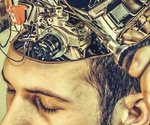 Apprendre et oublier pendant son sommeil : deux processus étroitement liés ?