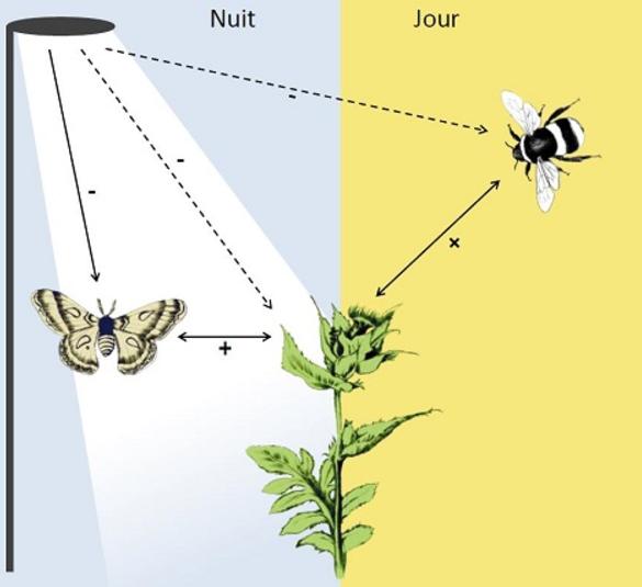 schema-abeilles-cnrs