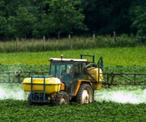 Glyphosate: la Commission persiste vers un renouvellement