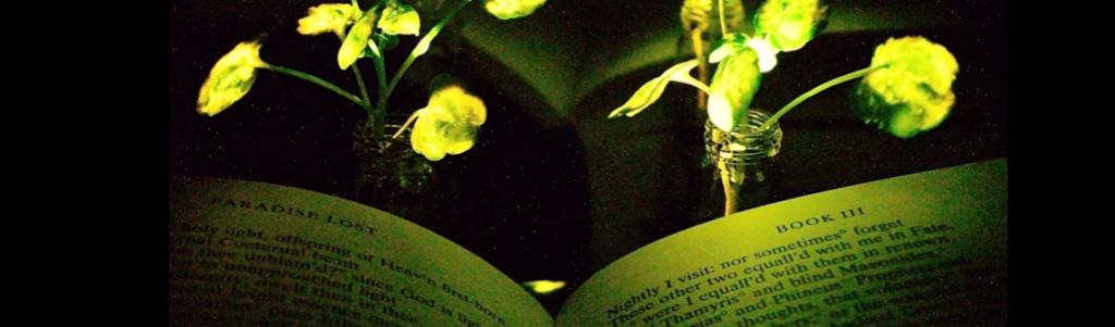 plantes-lumineuses-1140-336
