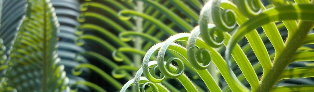carbone-vegetation-1140