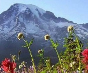 montagne-fleurs-rechauffement-1140