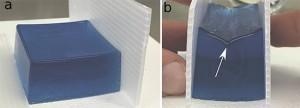 © P.Ciarletta Un bloc fait d'un hydrogel mou (a) est comprimé en appliquant une pression entre les doigts (b). On observe l'apparition soudaine d'un plissement de surface (flèche blanche) lorsqu'une compression critique est exercée.