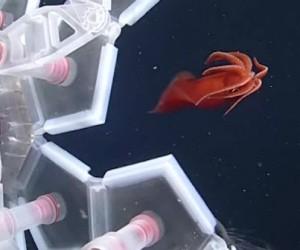 Revue du web #116 spéciale robotique : les 6 vidéos les plus étonnantes